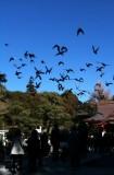 八幡宮の鳩